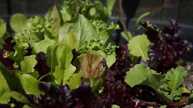 Burn belly fat - Dark leafy vegetables